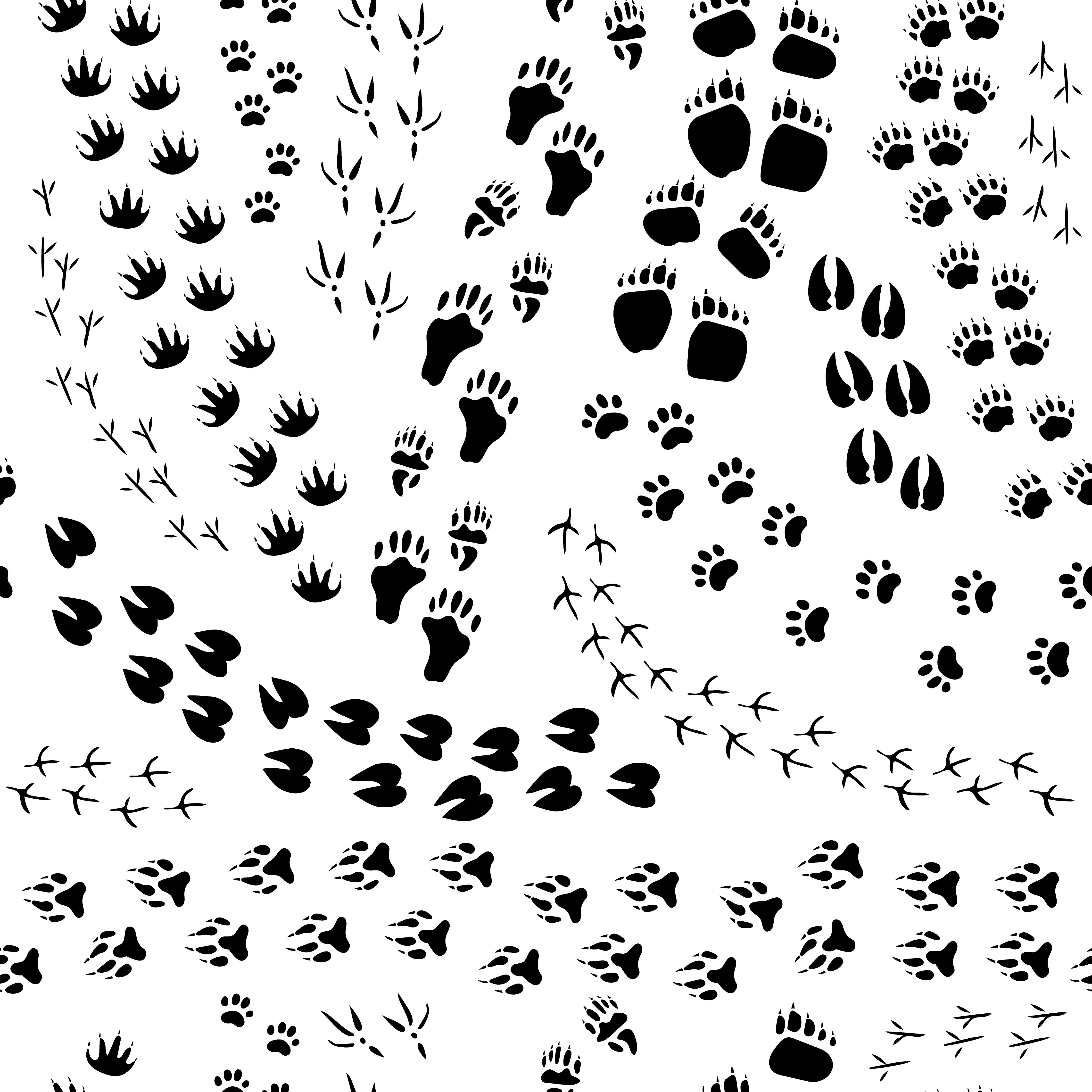 Animal Track Seamless Pattern Download Free Vectors