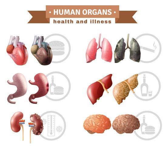 Poster medico di organi umani Heath Risks vettore
