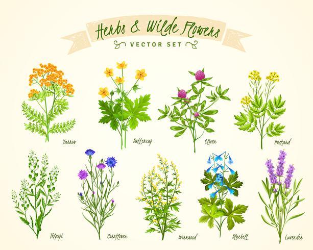 Ervas e conjunto de fundo de flores silvestres