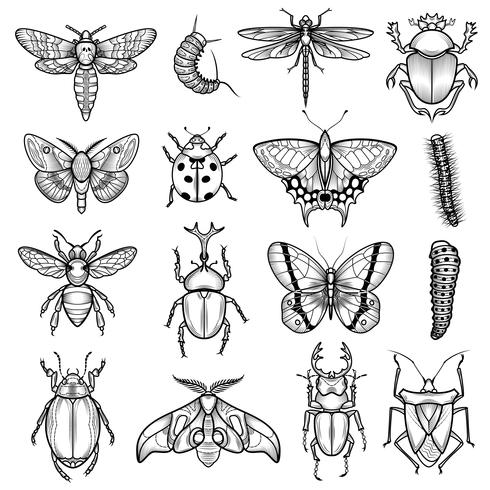 Insects Black White Line Icons Set  vector