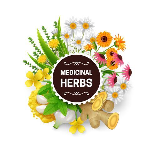 Hierbas medicinales plantas guirnalda marco plano vector