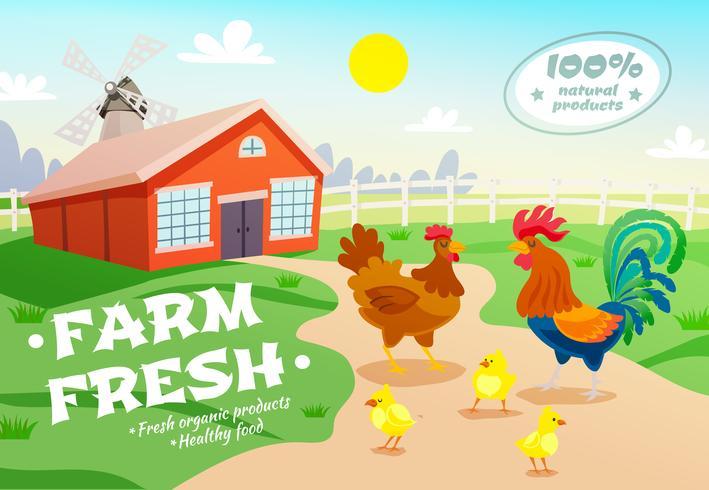 Fondo de publicidad de la granja de pollos vector