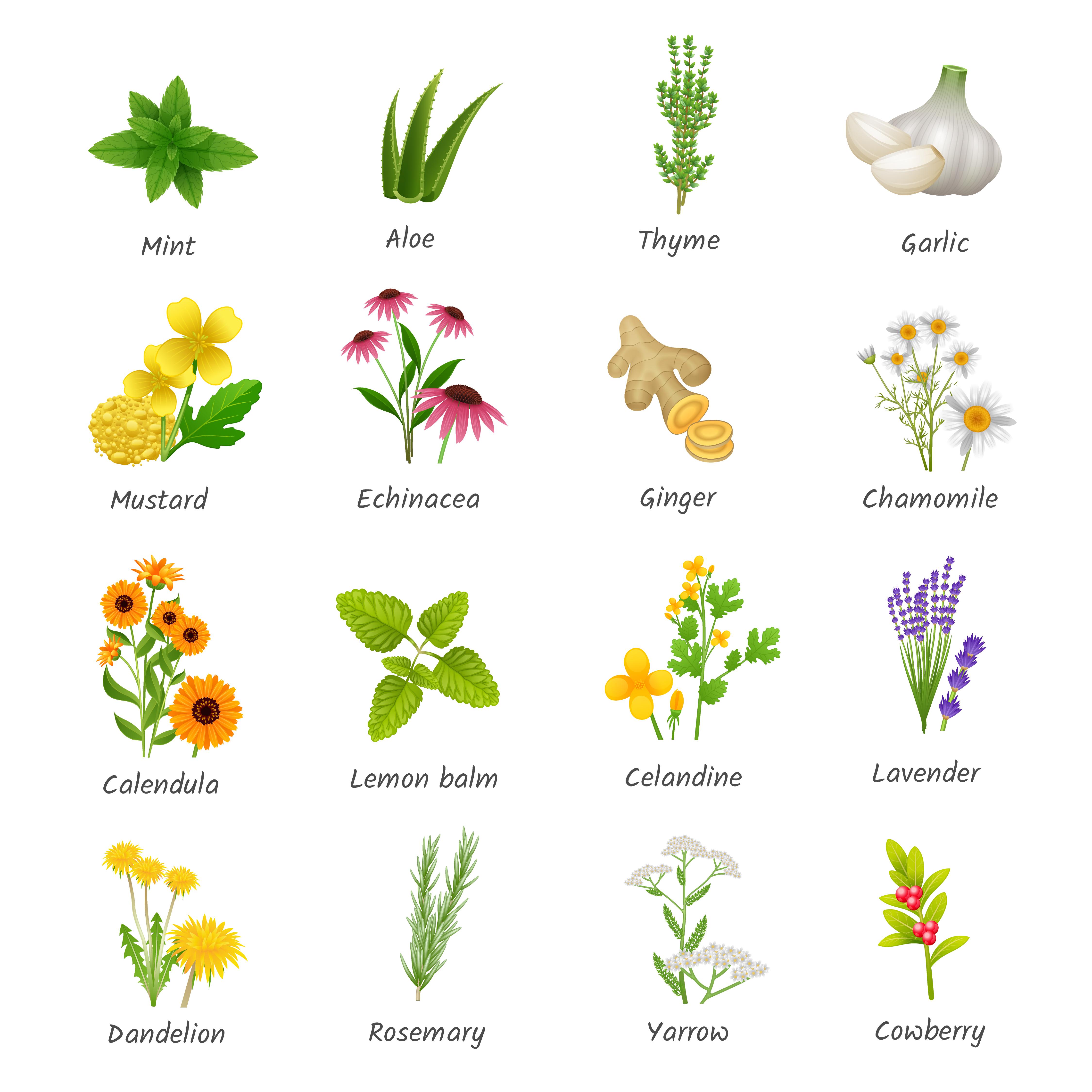 Medicinal Herbs Plants Flat Icons Set Download Free Vectors