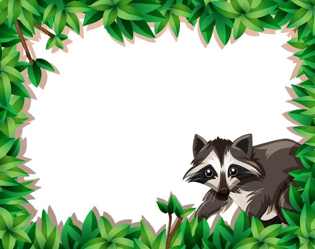 Raccoon on nature frame