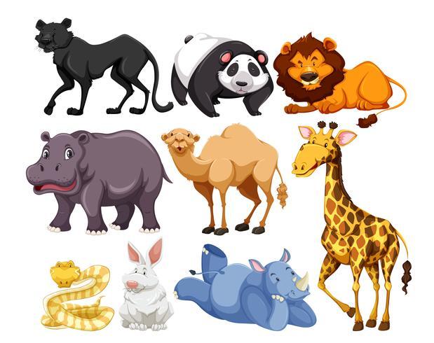 mezcla de animales de vida silvestre