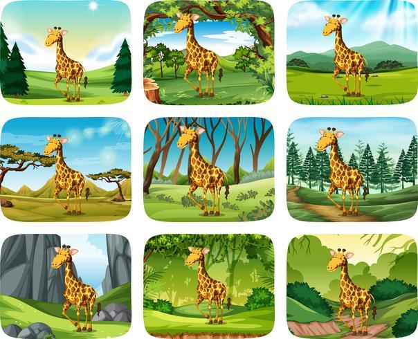 Set of giraffe scenes vector