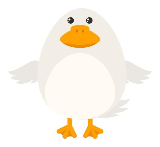White duck on white background