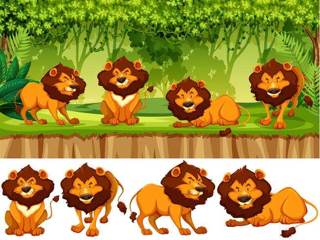 Löwe in freier Wildbahn