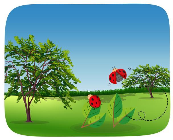 Ladybug in nature landscape