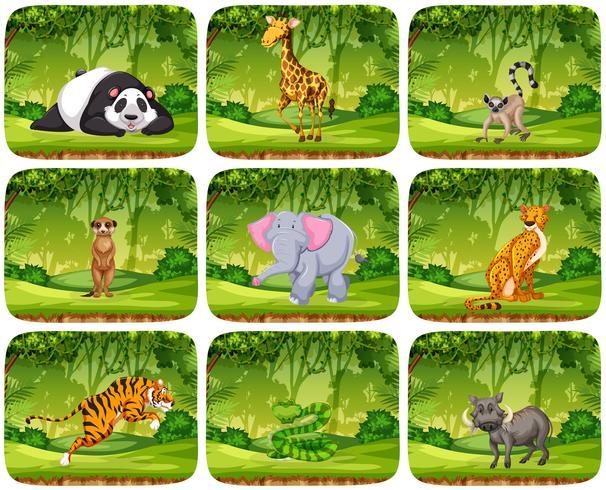 Conjunto de animales en scenens de selva vector