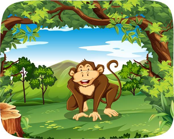 En apa i vild skog