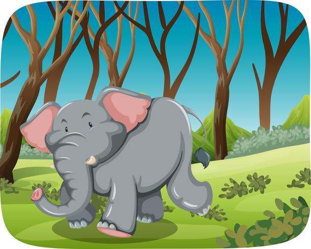 Éléphant, courant, dans, forêt