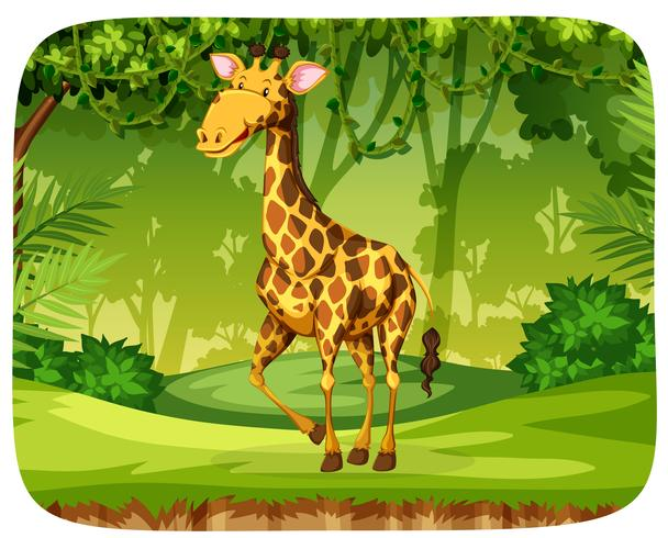 A giraffe in the forest