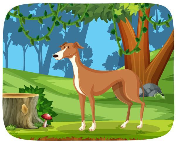 Ein Windhund im Naturhintergrund vektor