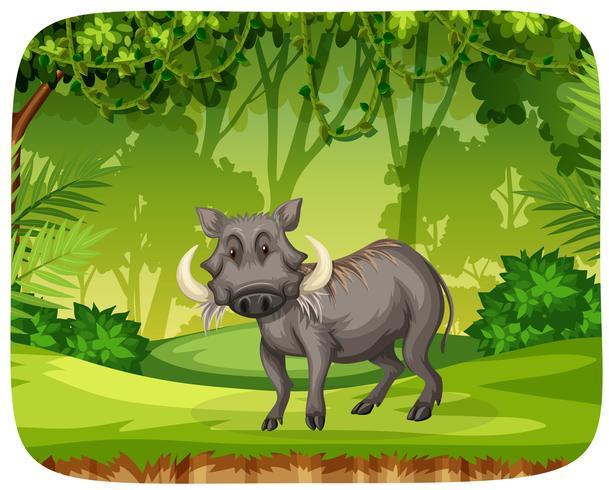 Schweine im Dschungel