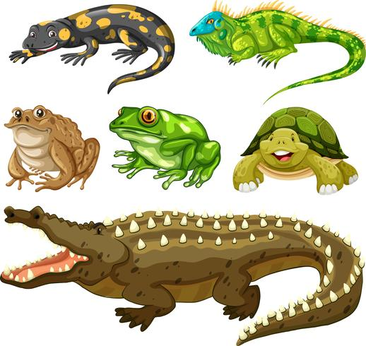 Set of reptile animal vector