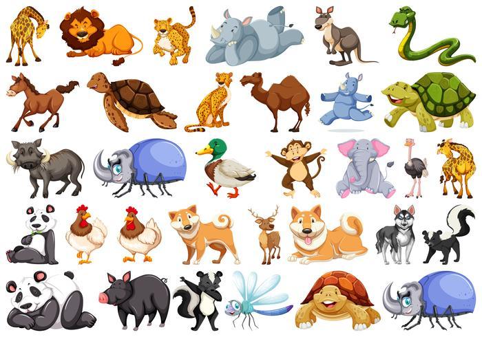 Satz von Tiercharakter