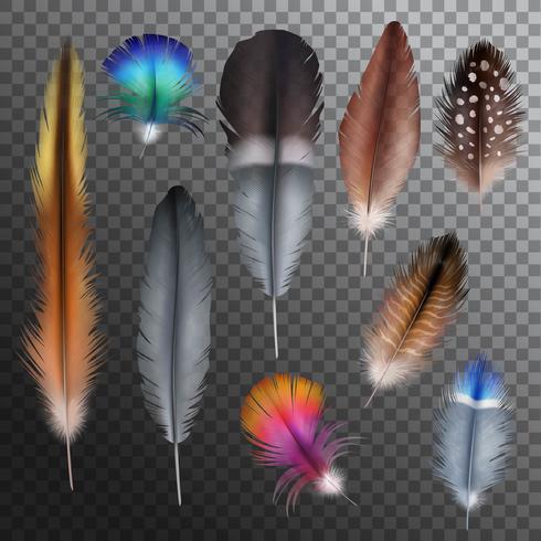 Feathers Realistic Transparent Set
