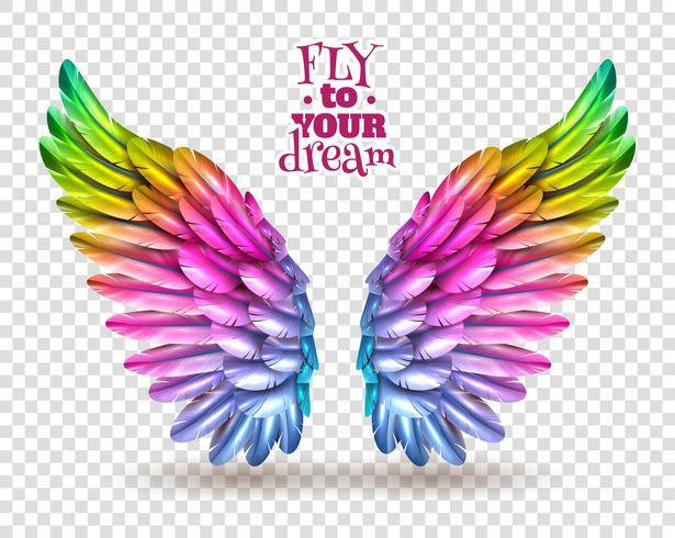 Ensemble d'ailes couleur transparent