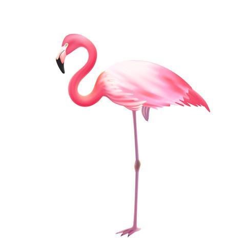 Icône réaliste une jambe de flamant rose