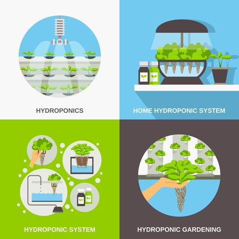 Concepto plano de hidroponía