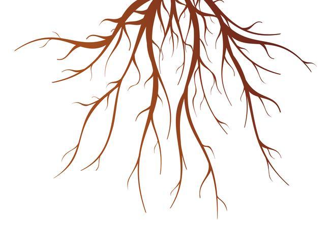 Raiz de árvore isolada ilustração