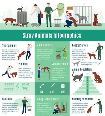 Conjunto de infográficos de animais vadios
