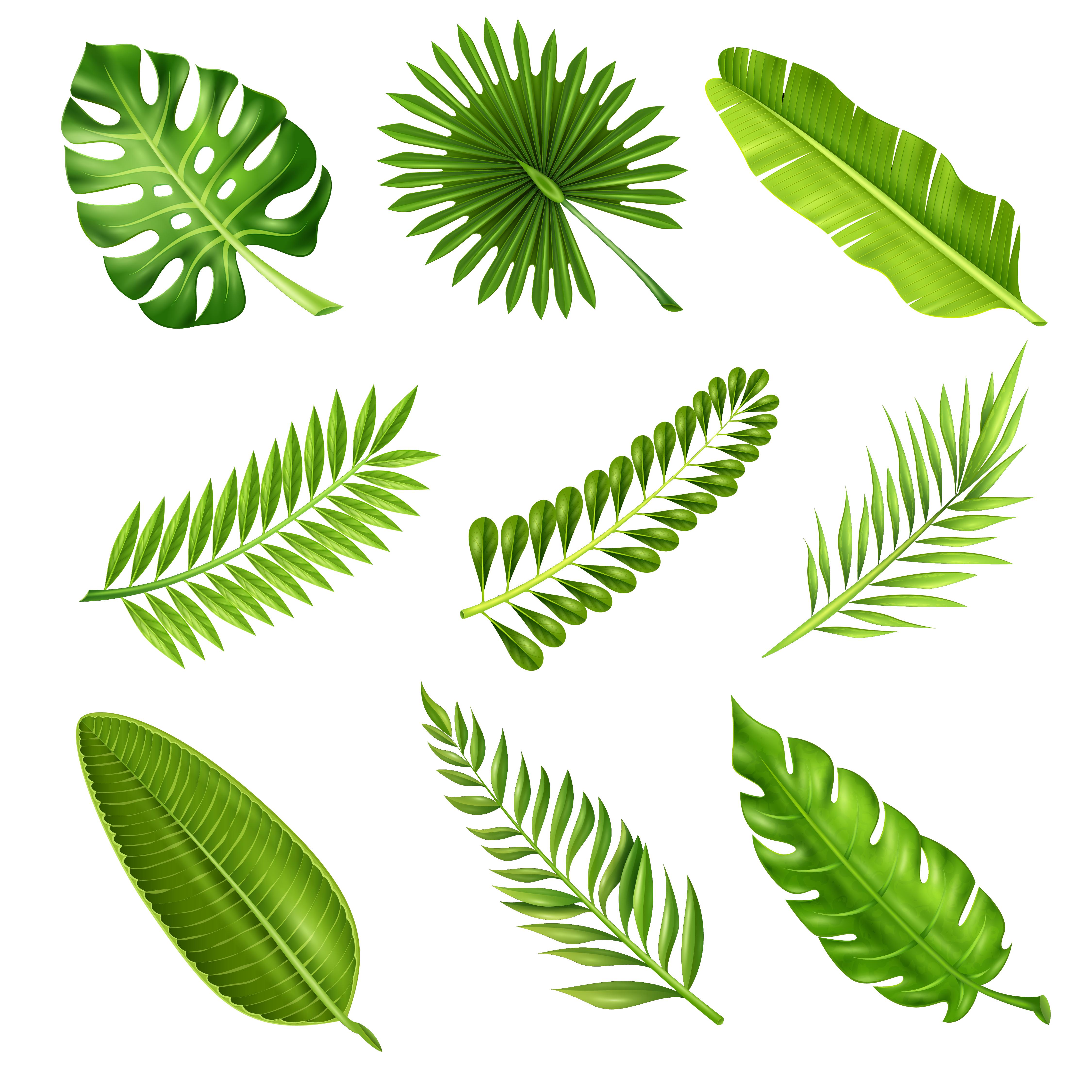 Pashudhan and Animal Science : Palm tree - Symbol of