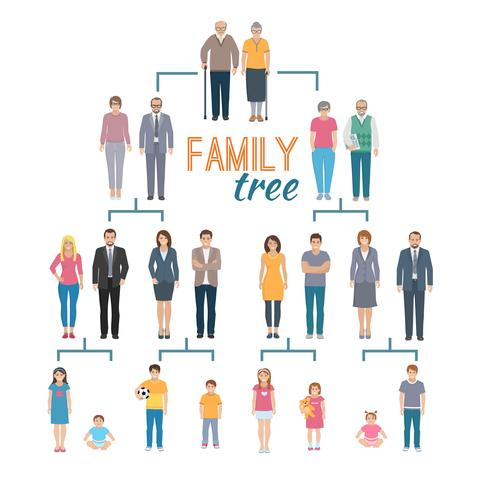 Genealogy Tree Illustration vector