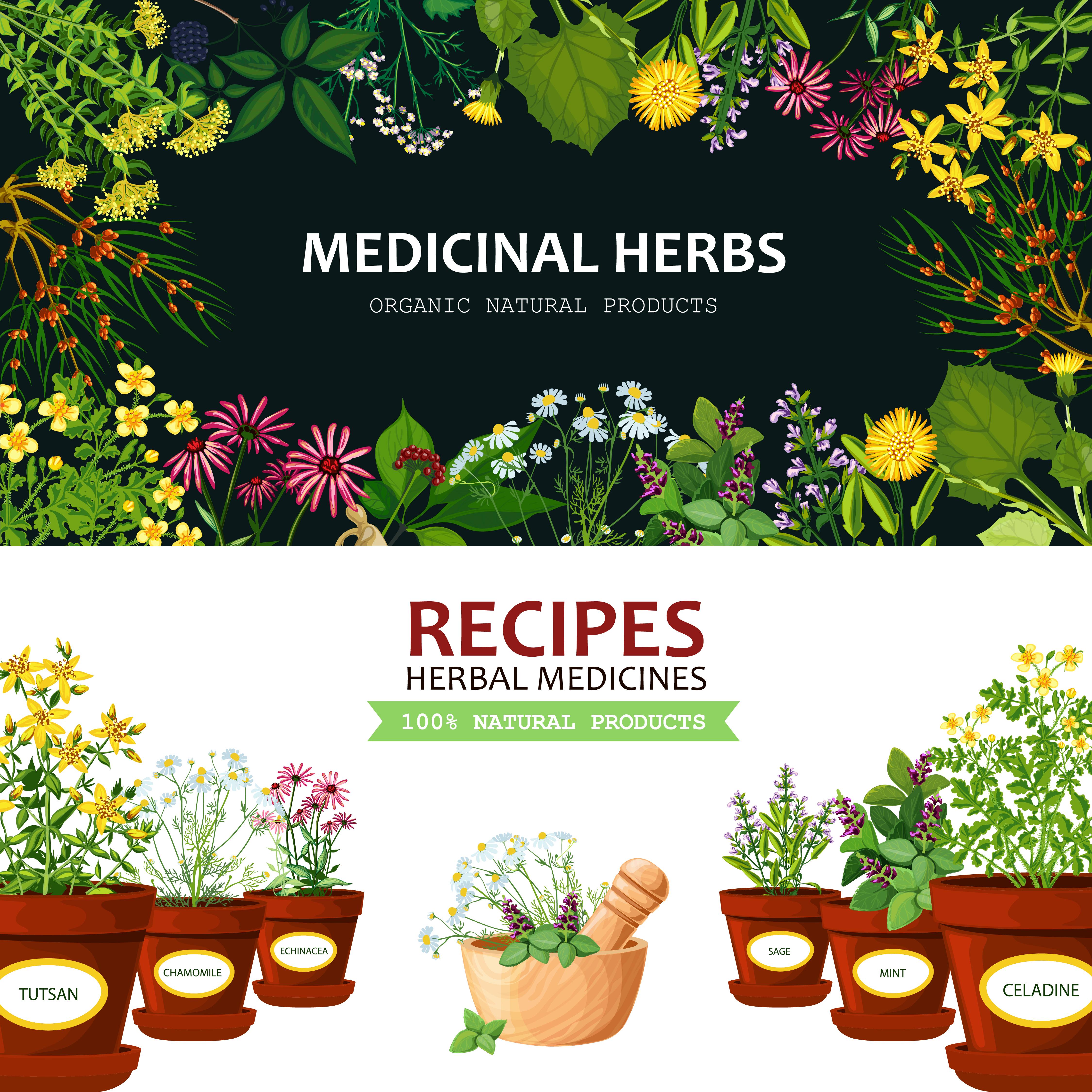 Medicinal Herbs Banners Download Free Vectors Clipart Graphics Vector Art
