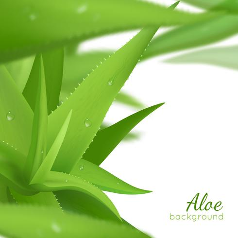 Green Aloe Vera Realistic Background vector