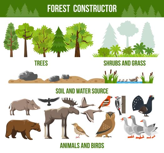 Forest Constructor Poster vector
