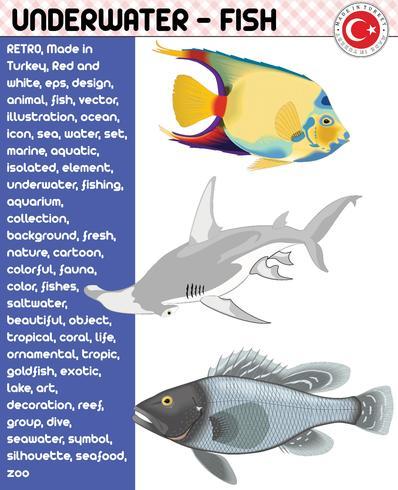 Peces, Especies de peces - Vida submarina, eps vector