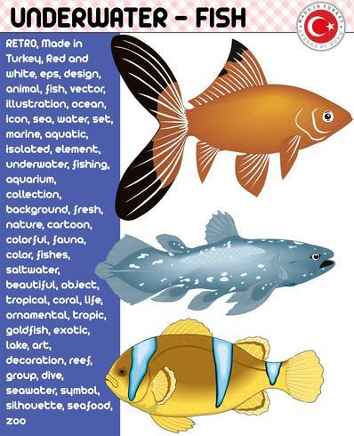 Fish, Fish Species - Underwater Life, eps vector