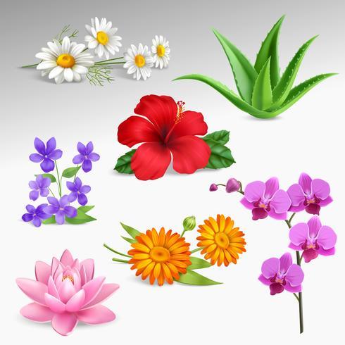 Colección de iconos realistas plantas de flores vector
