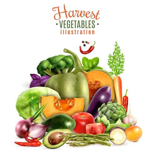Colheita De Legumes Ilustração vetor