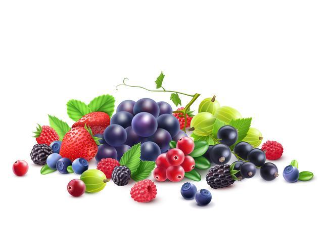 Mogen Ripe Berries vektor