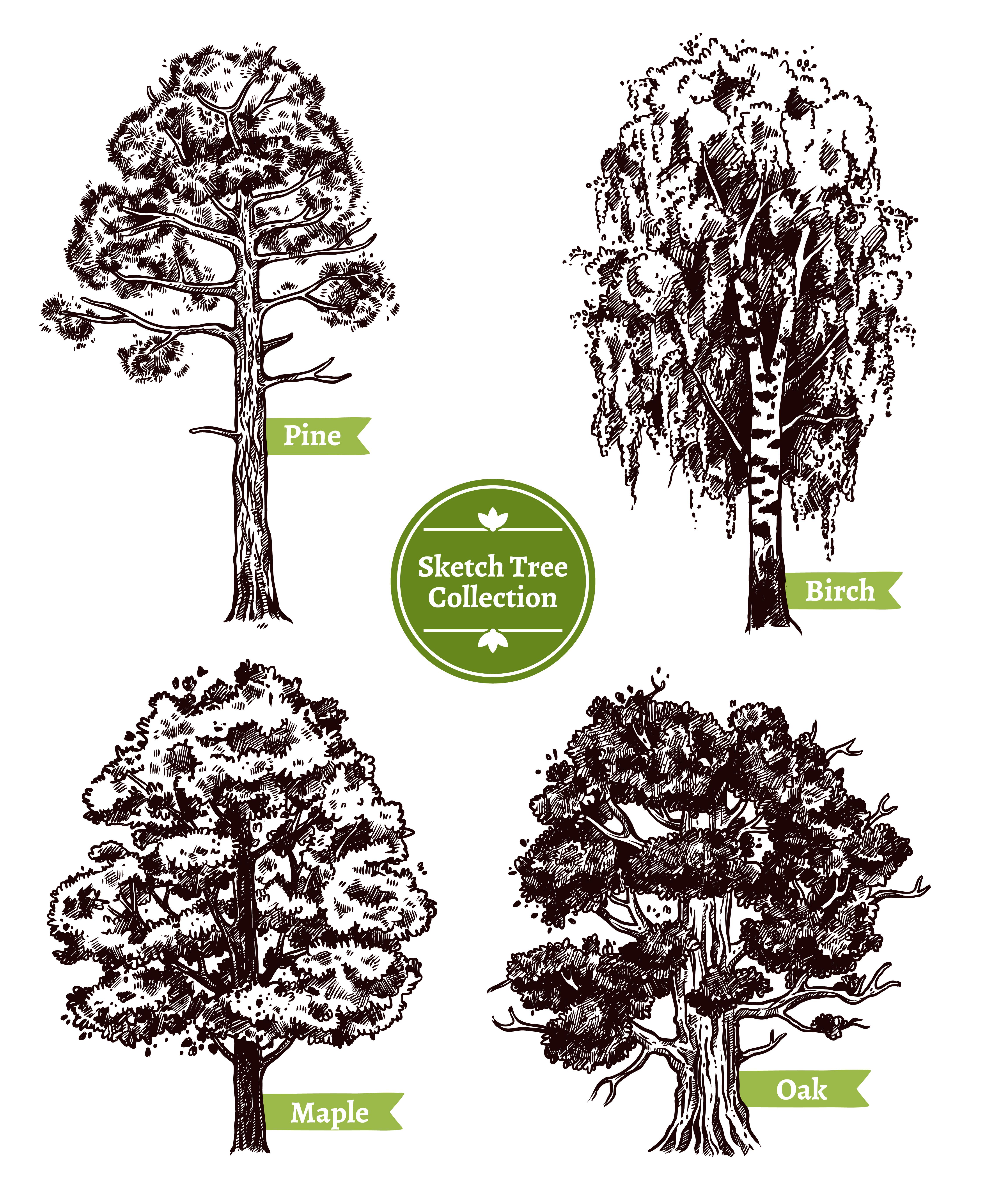 Sketch Tree Set Download Free Vectors Clipart Graphics