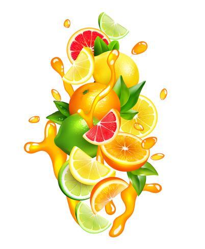 Citrus Fruits Juice Drops Composição Colorida vetor