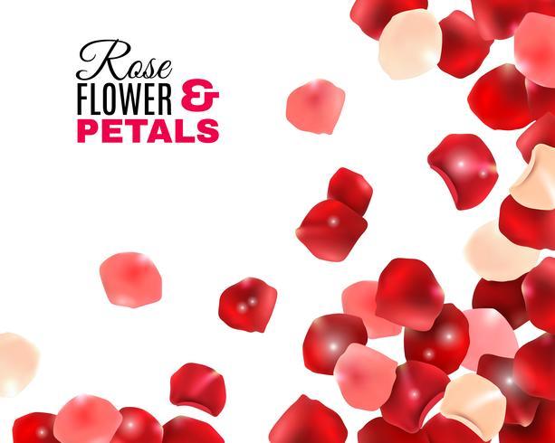 Rose Flower Petals Background vector