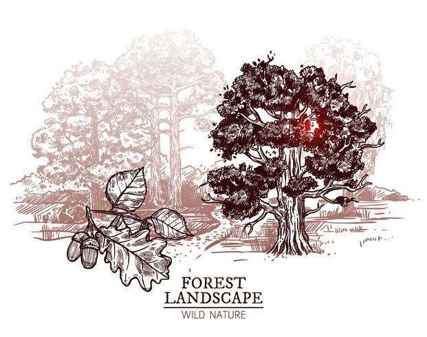 Schets Boom Landschap Illustratie