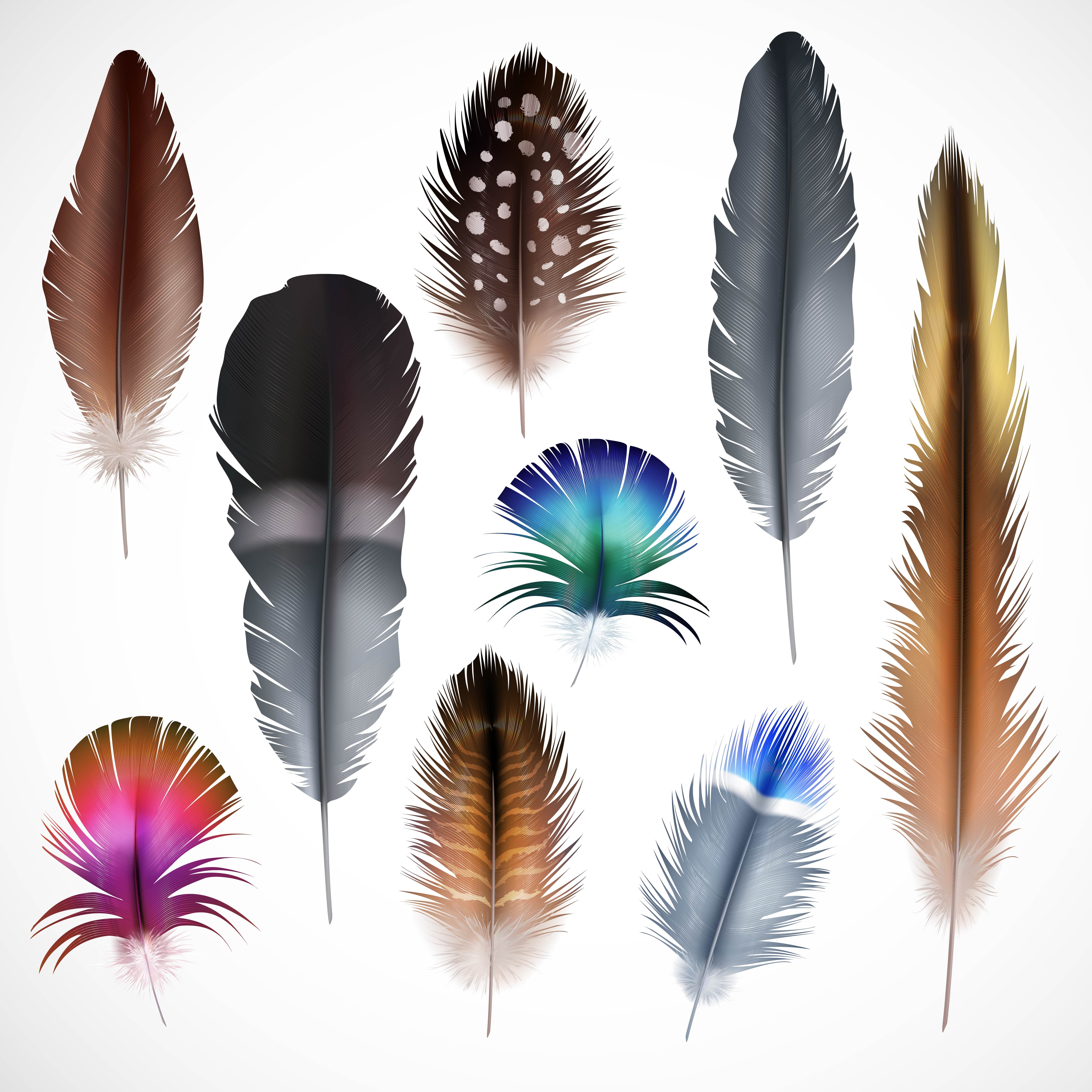 Realistic Feathers Set Download Free Vector Art Stock