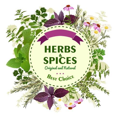 Herbal Background With Meadow Flowers vector