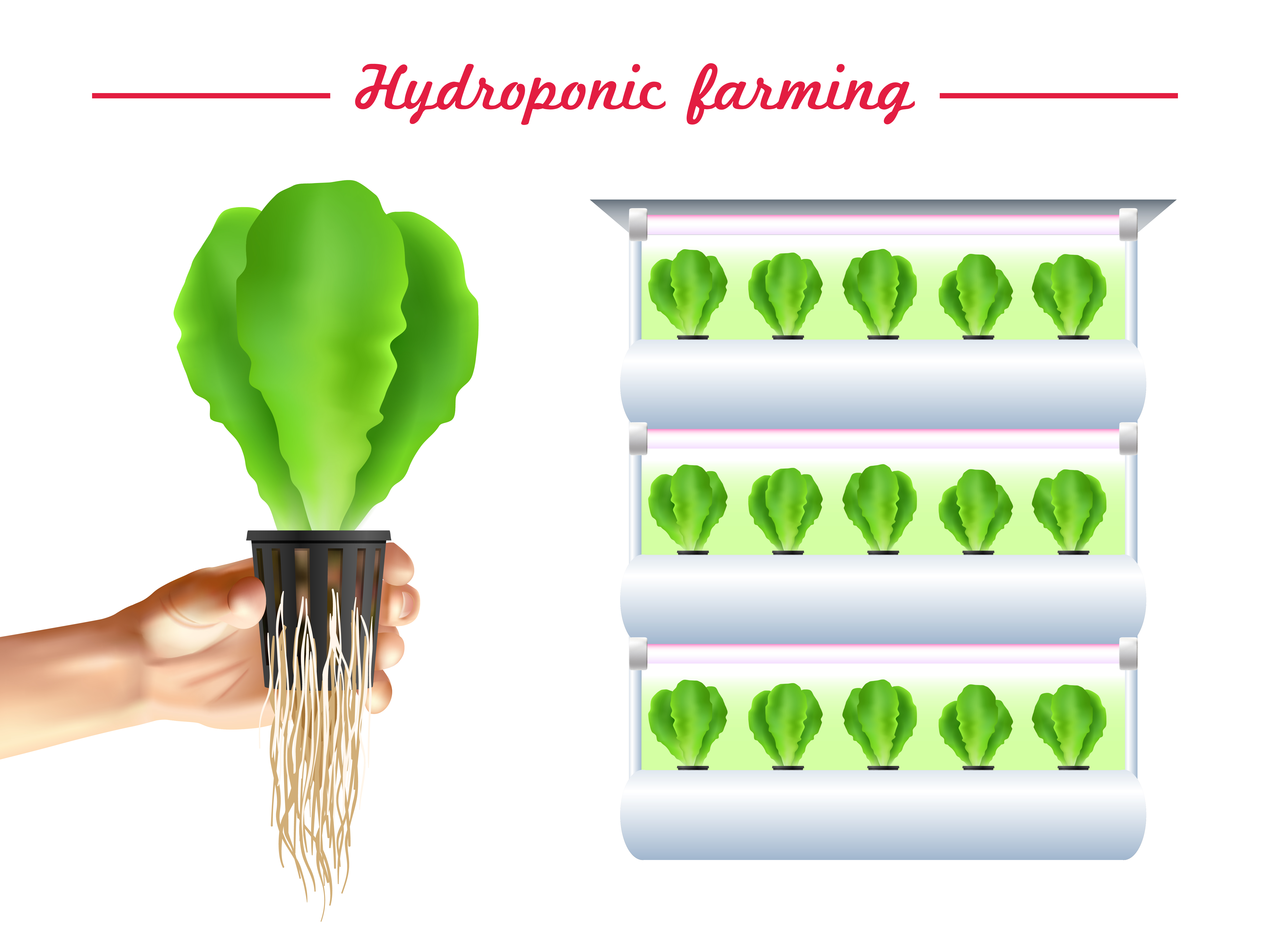 Hydroponics System Poster Vector - Download Free Vector Art