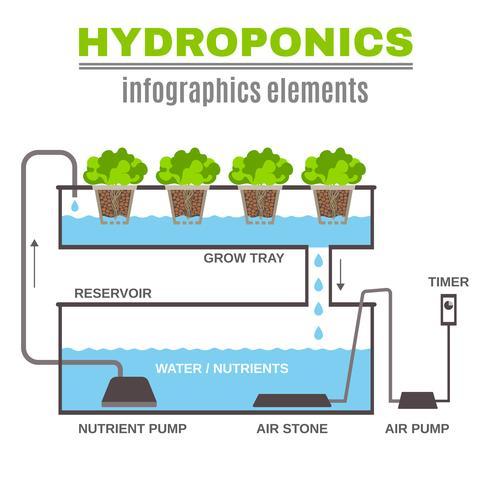 infografisk hydroponisk illustration