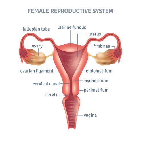 Baarmoeder Poster