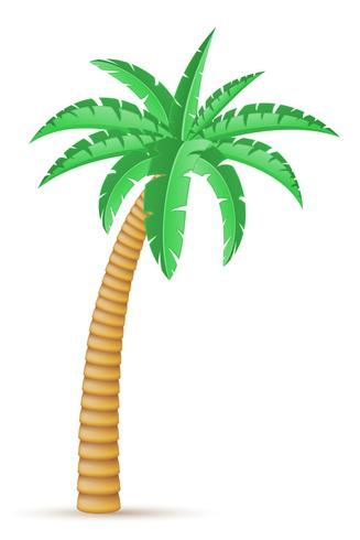 palm tropical tree vector illustration
