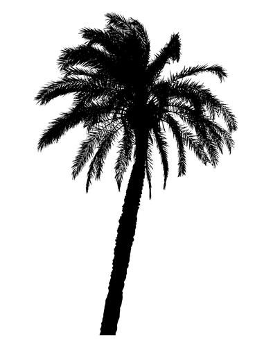 Schattenbild der realistischen Vektorillustration der Palmen