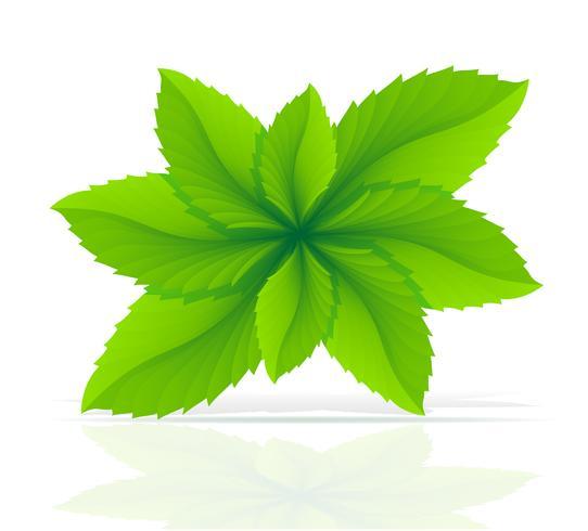illustrazione di vettore di foglie di menta astratta