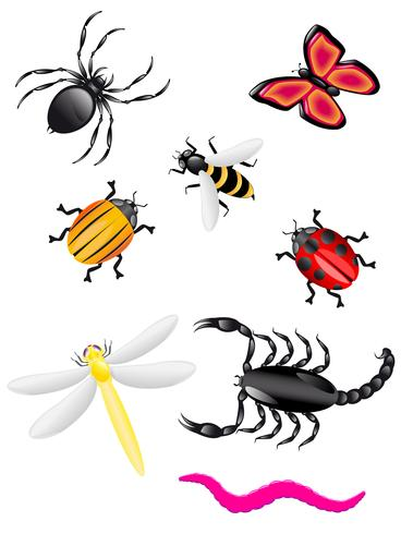 beetles and insects colors vector